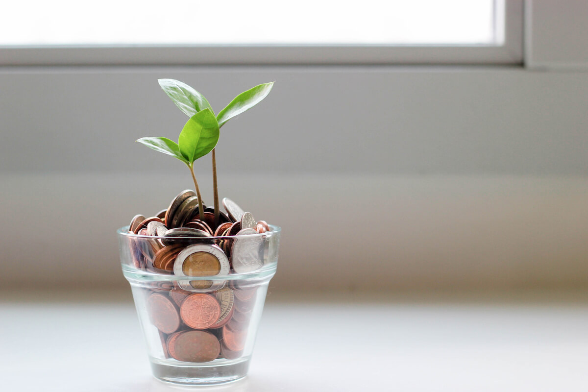 Small plant with coins as dirt